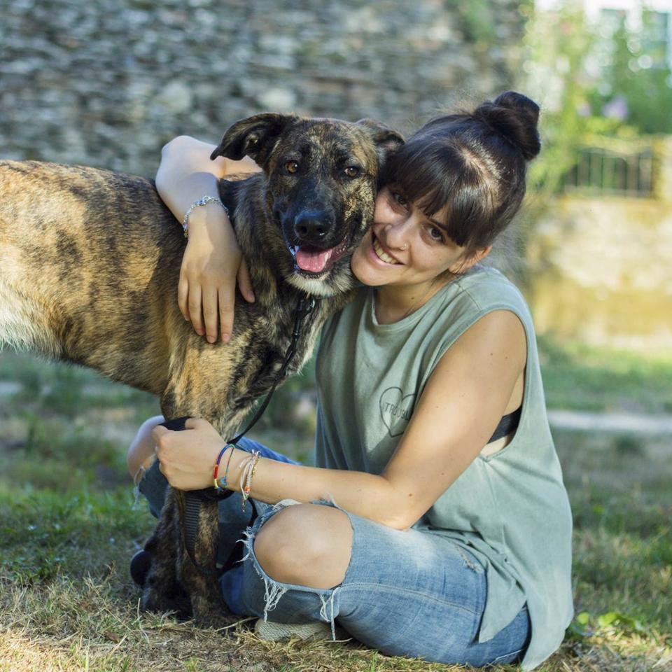 Alma de perros - Adiestramiento canino